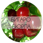 БИГАРО-01