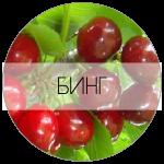 БИНГ-01