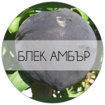 БЛЕКАМБЪР-01