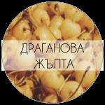 ДРАГАНОВА-01