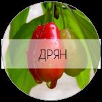 ДРЯН-01
