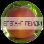 ЕЛЛЕЙДИ-01