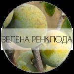 ЗЕЛЕНАРЕНКОЛДА-01