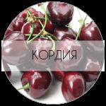 КОРДИЯ-01