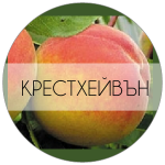 КРЕСТХЕЙВЪН-01