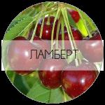ЛАМБЕРТ-01