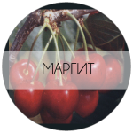 МАРГИТ-01