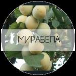МИРАБЕЛА-01