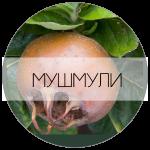 МУШМУЛА-01