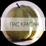 ПАСКР-01