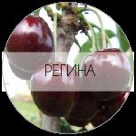 РЕГИНА-01