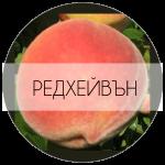 РЕДХЕЙВЪН-01