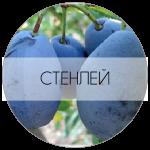 СТЕНЛЕЙ-01