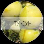 ТУСУН-01