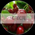 ЧЕЛЕСТЕ-01-01