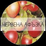 ЧЕРВЕНААФЪЗКА-01