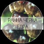 ЧЕРНА-01